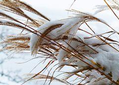 Schwungvoll winterlich