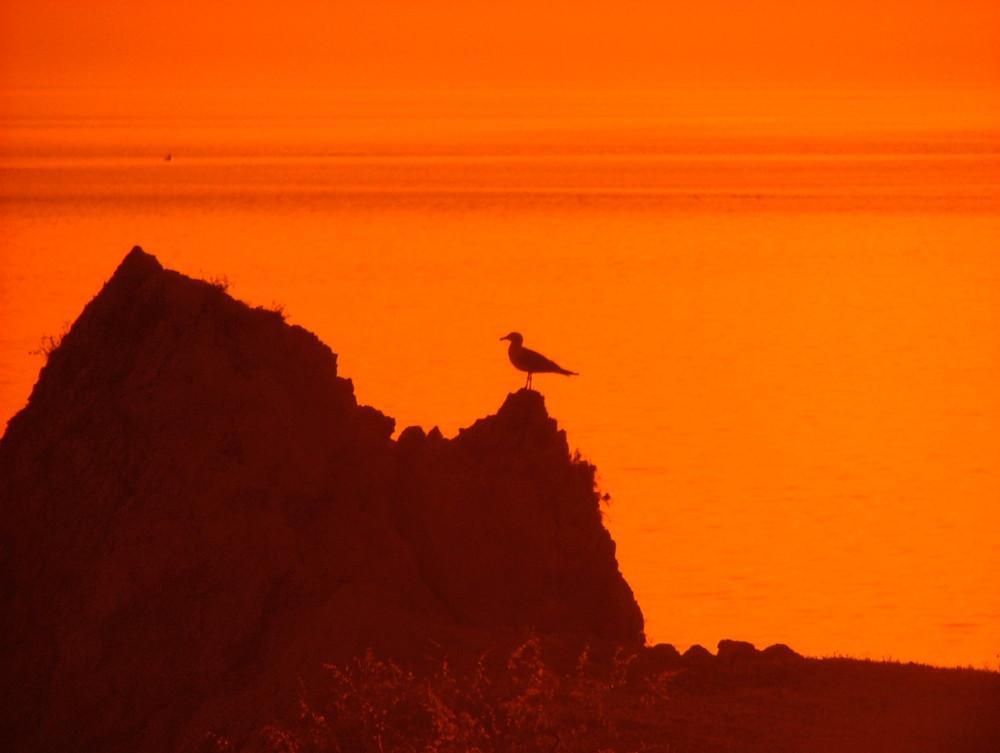 Scorcio Levanzo con Gabbiano - Natura Selvaggia