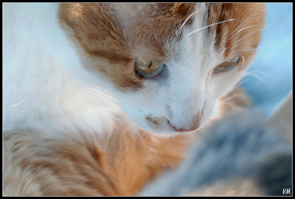 Scotch, my lovely cat...
