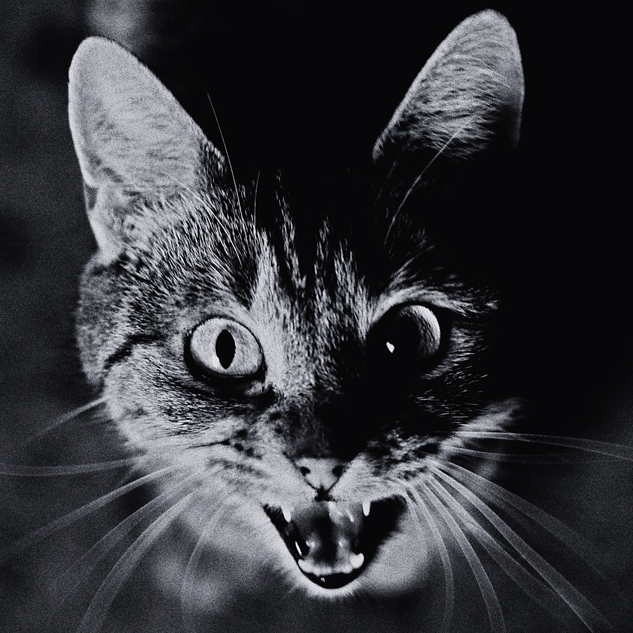 - scream -