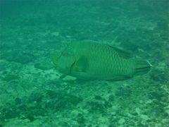 scuba maldives 11