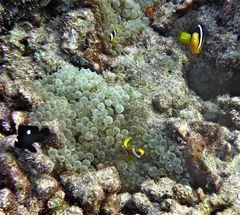 scuba maldives 12