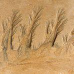 Sculpture naturelle sur sable