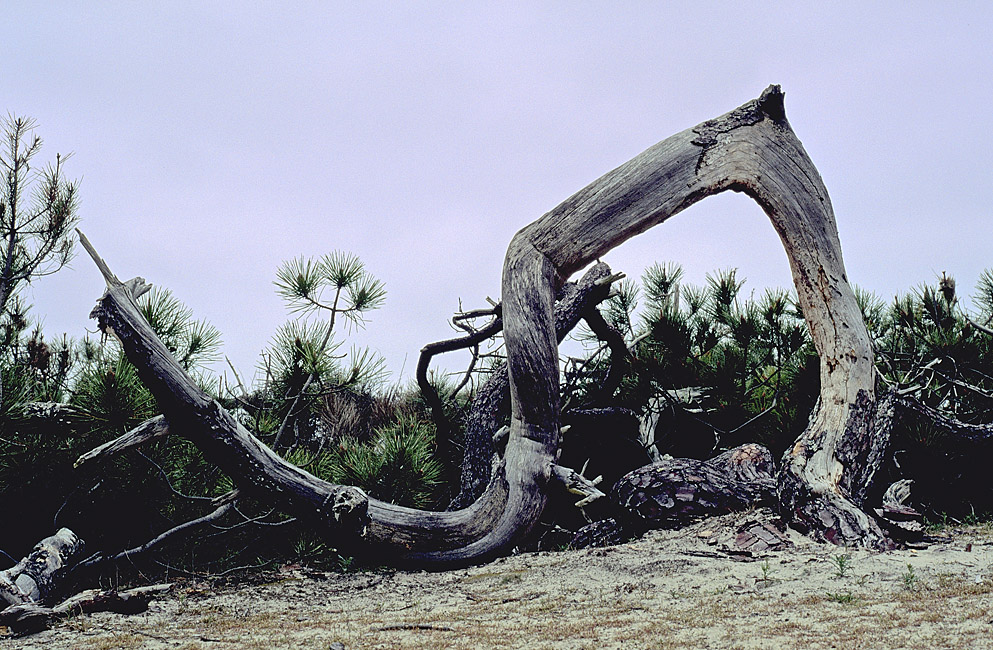 Sculpture océanne