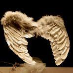 SE IO FOSSI UN ANGELO....