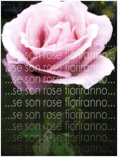Se Son Rose Fioriranno Foto Immagini Piante Fiori E Funghi Natura Foto Su Fotocommunity