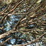 Se tenir aux branches...