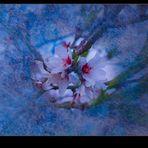 Se vislumbra... la primavera
