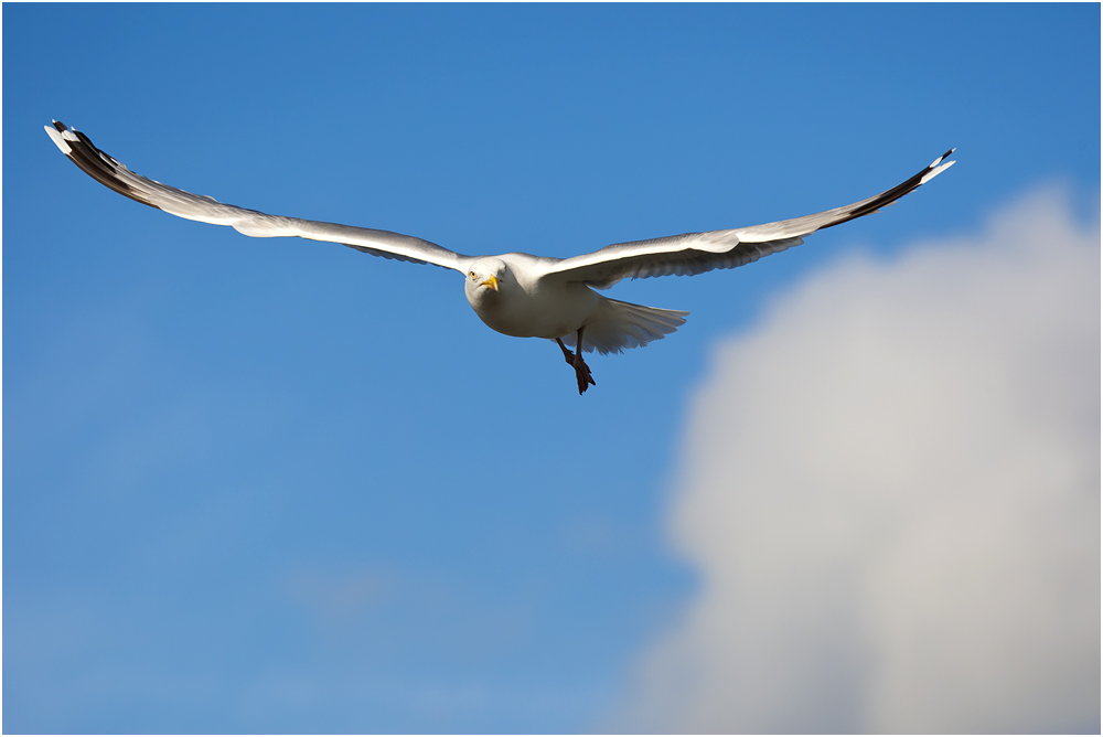 sea-bird-me