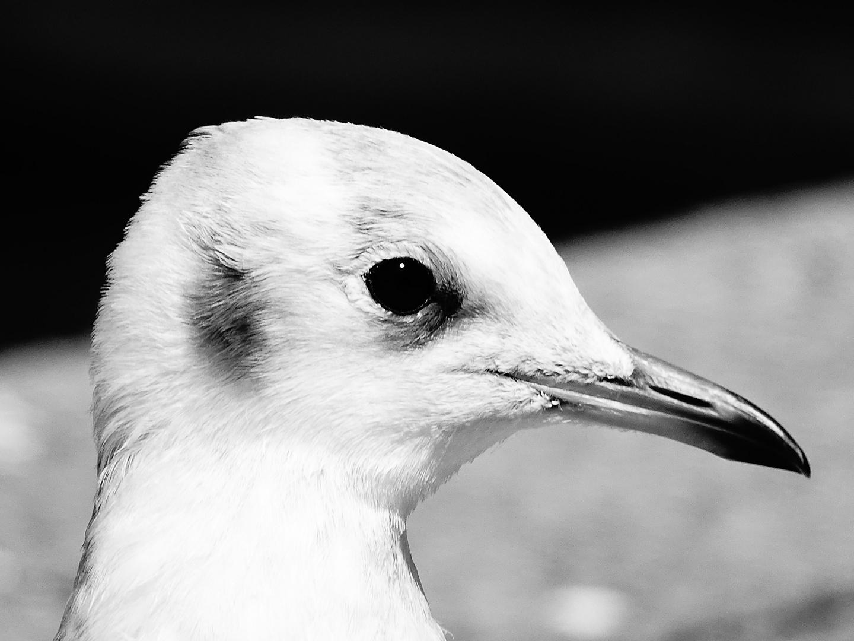 Sea gull :)