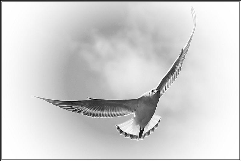 Sea-gull in backlight