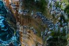 Sea gulls perching on the Cliff