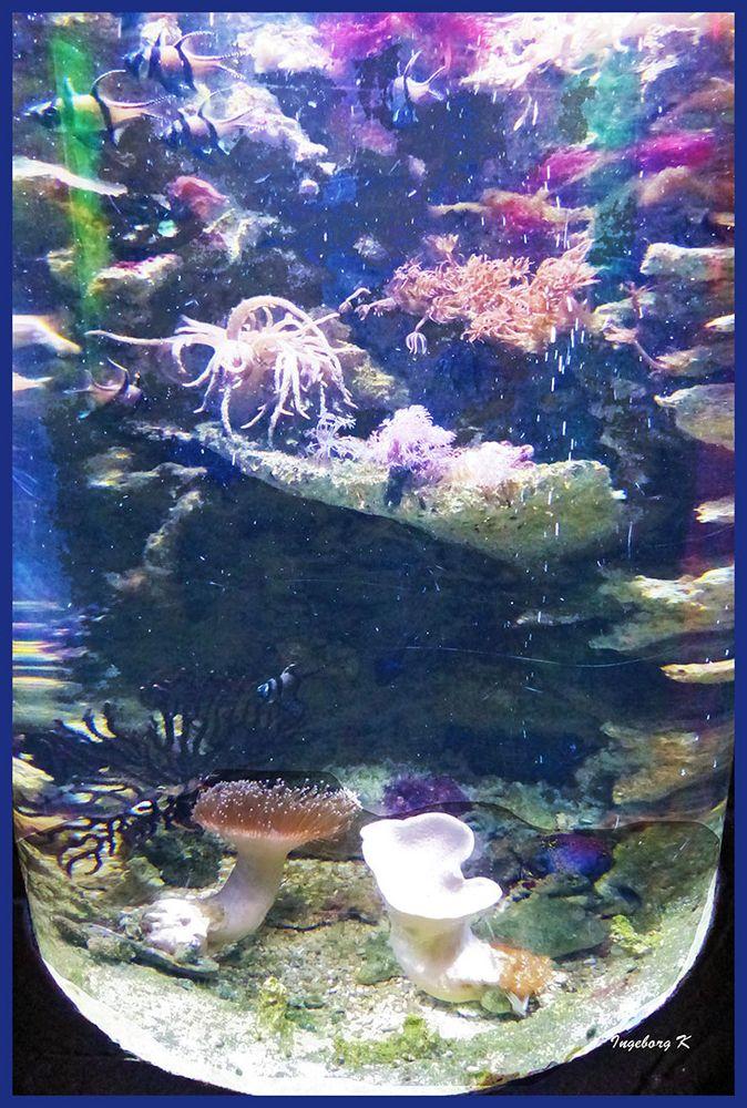 Sea life Oberhausen - Korallen