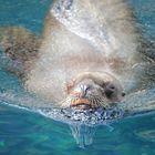 Sea Lion smile