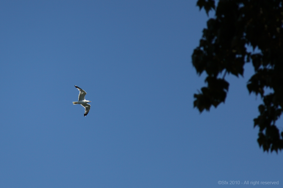 ...Seagull...