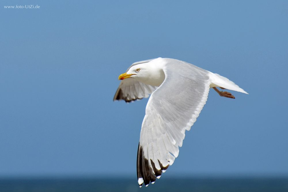 Seagull is watching you