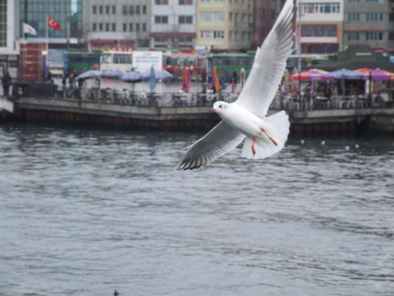 Seagull said