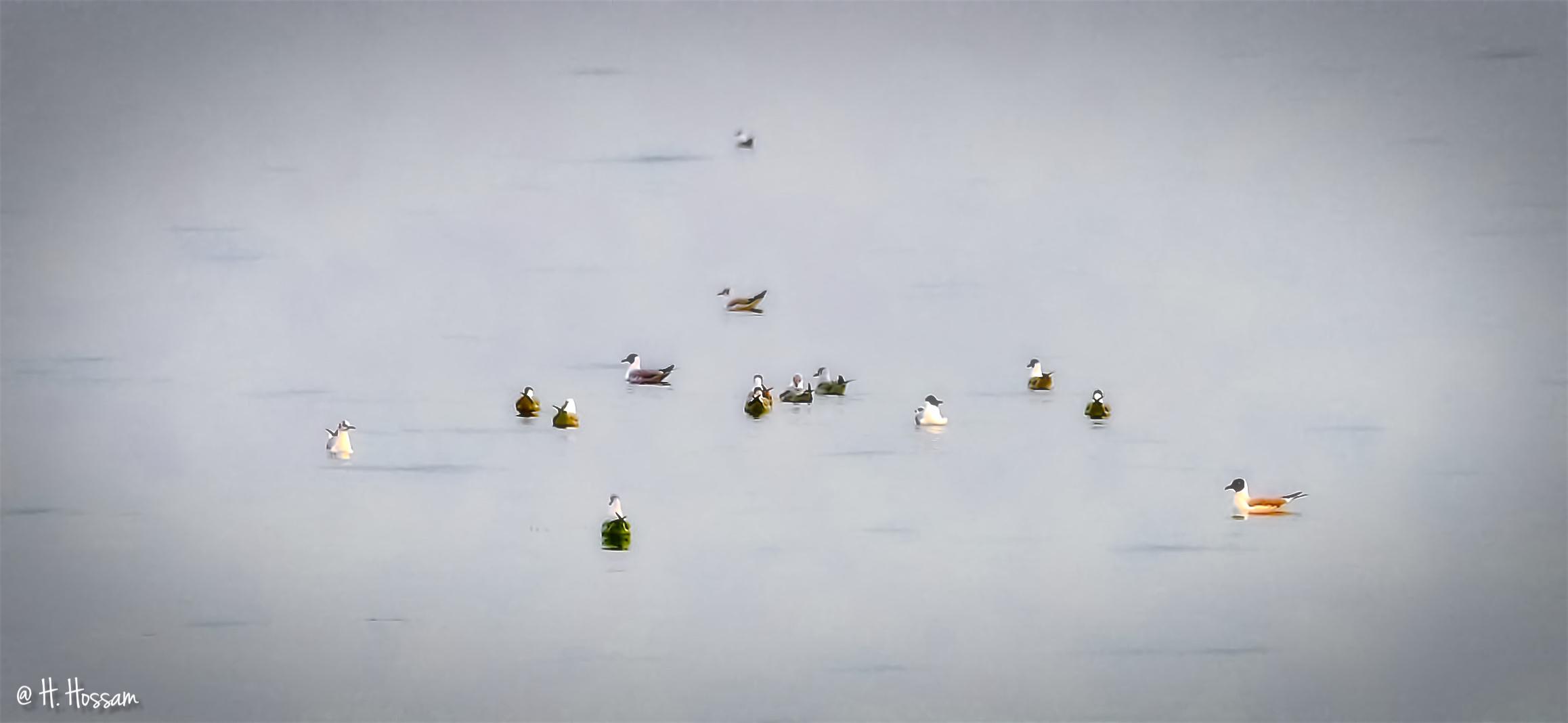 Seagulls' Dream