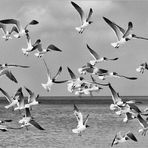Seagulls in the wild.