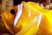 seahorse-cologne