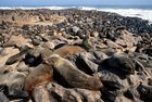 Seal Bay bei Swakopmund