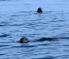 Seal heads