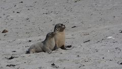 SealBay Youngsters