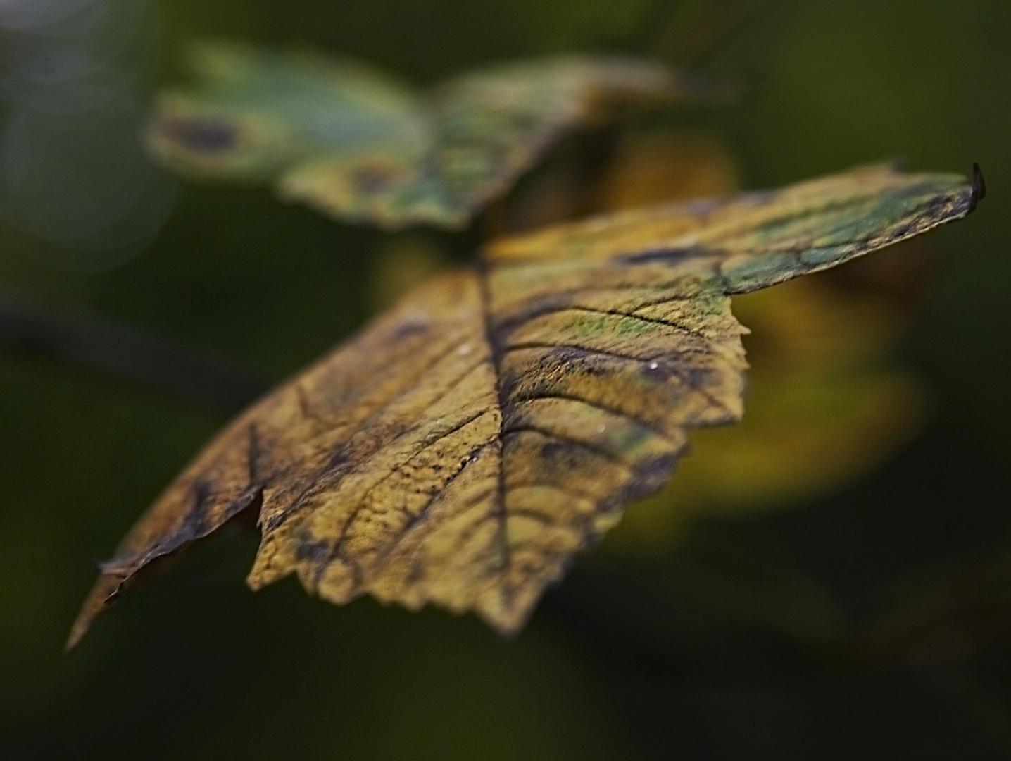Seasonal color