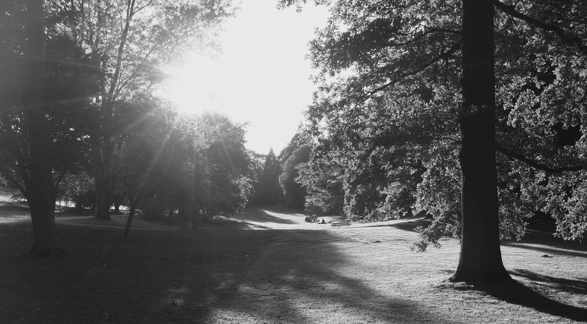 Seasons in the park