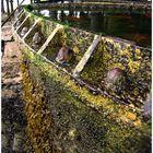 Seaweed,Barnacles&Rust