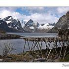 Séchage de la morue en Norvège