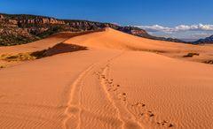 Second Dune 2, Coral Pink Sand Dunes SP, Utah, USA