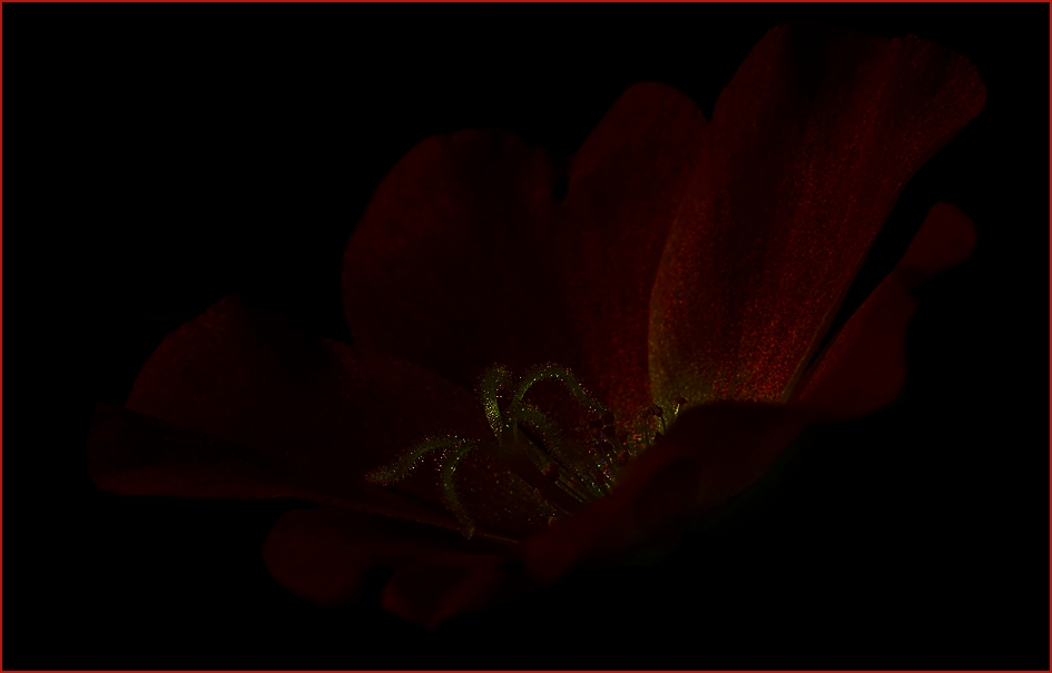 *Secret of darkness* LADY IN RED