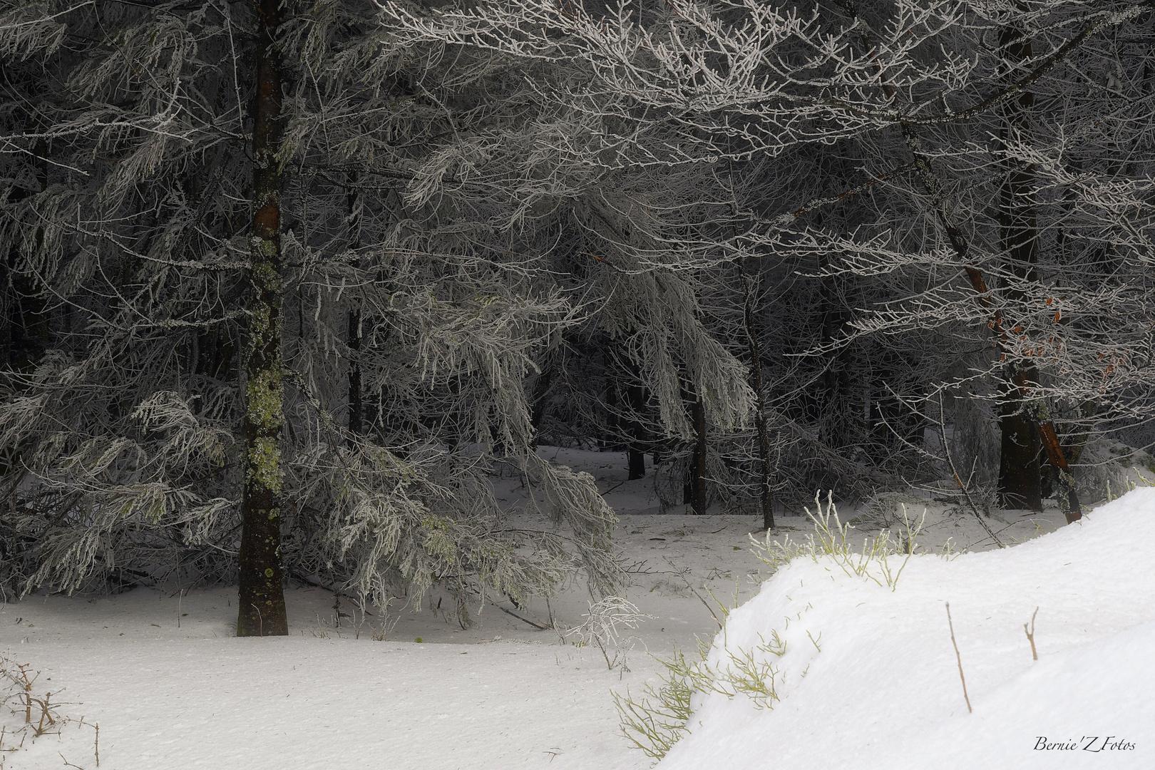 Secrets dans la forêt enneigée