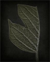 """ secrets of nature VII """