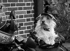 security dog.....