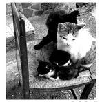 Sedia con gatti