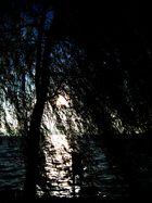 See, Baum und Sonne