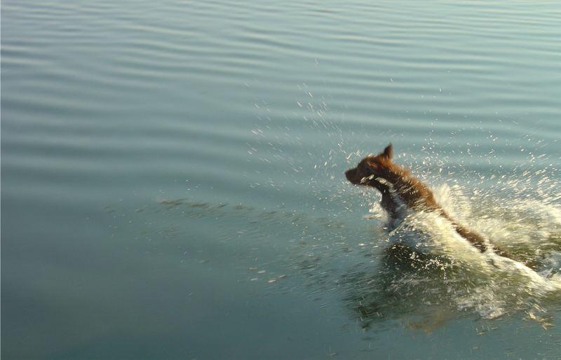 See-Hund (...kann wohl doch nicht übers Wasser laufen)