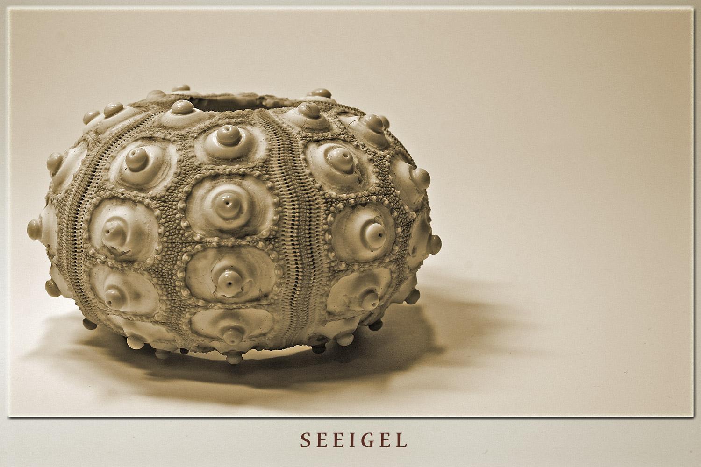 See-Igel