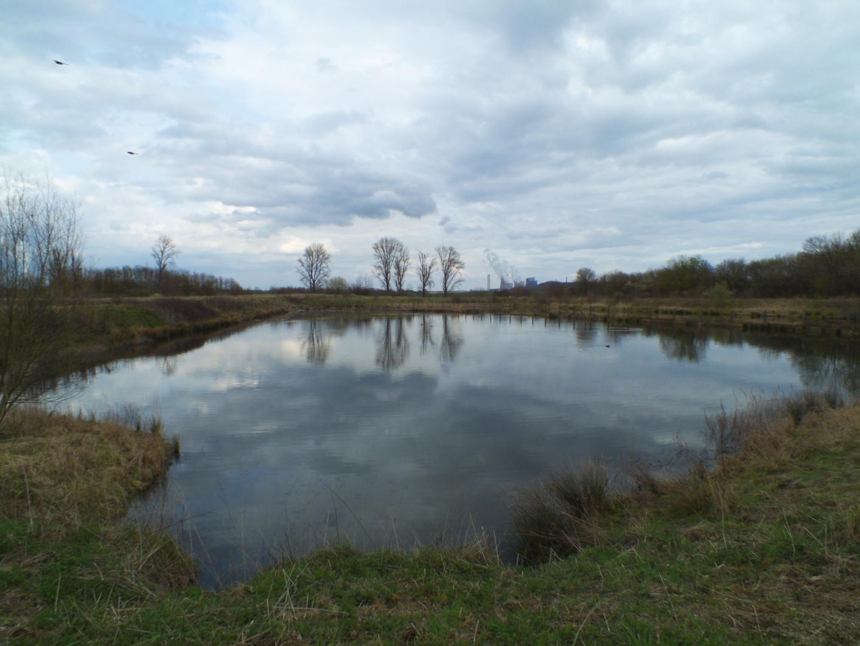 See im ehemaligen Klärteichgebiet Bedburg