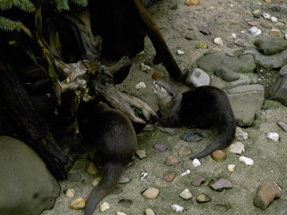 See Otter oder so