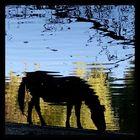 See-Pferdchen