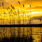 See, Schilf, Sonnenuntergang
