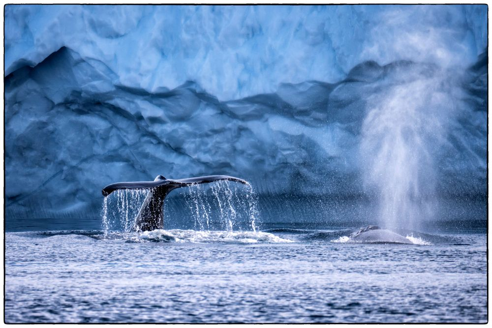 See the whales