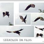 Seeadler 2