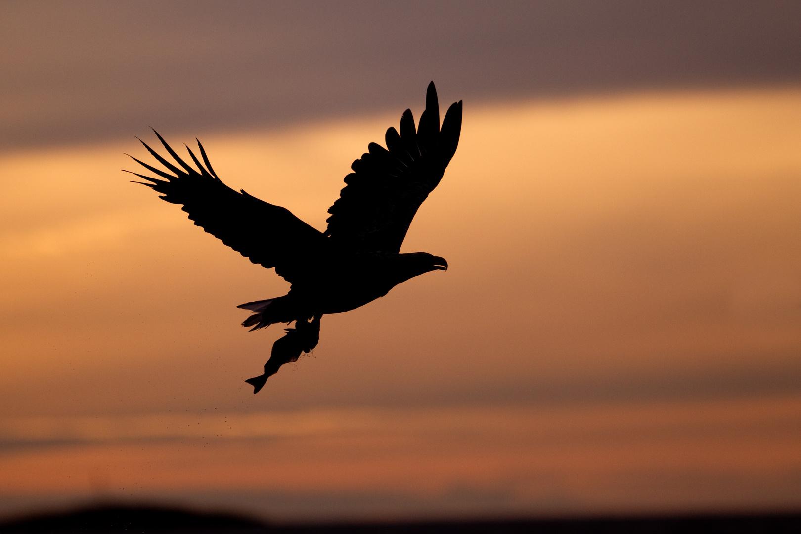 Seeadler So Geht Ein Wunderschöner Tag Zu Ende Vielen Vielen Dank