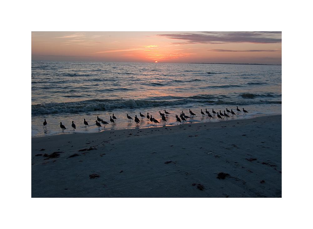 seebirds