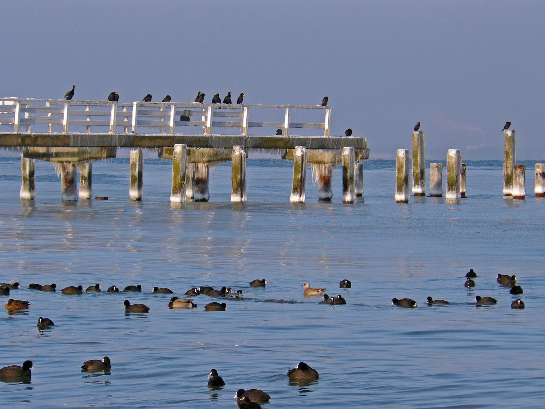 Seebrückenbesatzung I
