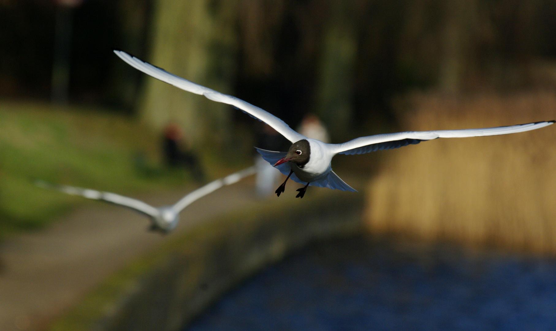 Seegulls flying around!
